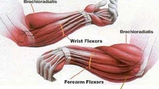HOW TO MAKE YOUR FOREARMS BIGGER AND STRONGER
