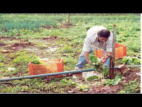 Clique e veja o vídeo Horta Caseira - Ponto de Colheita
