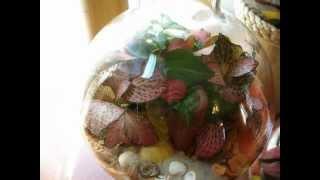 Флорариум сад за стеклом(Группа в Контакте: http://vk.com/flora24., 2012-08-27T15:58:25.000Z)