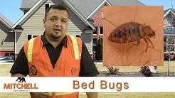 Bed Bugs - Mitchell Pest Services