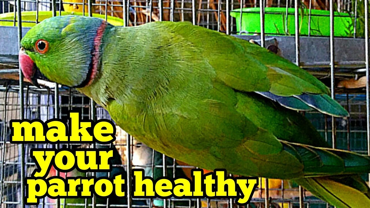 How to care for a parrot