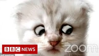 Lawyer uses Zoom filter by mistake - 'I'm not a cat' - BBC News