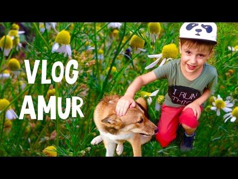 VLOG/ Амур моя любимая собачка