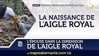 LA NAISSANCE DE L'AIGLE ROYAL