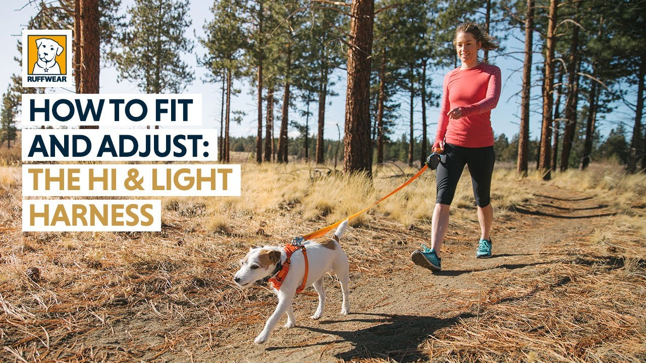 How To Fit And Adjust The Ruffwear Hi Amp Light Dog Harness