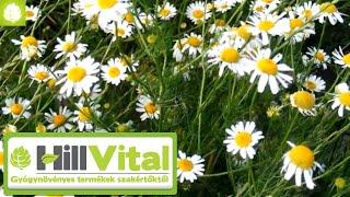 Így kezeld a napégést, hogy elkerüld a melanómát! 🌞 - HillVital