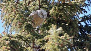 Wildlife in Fish Creek Provincial Park