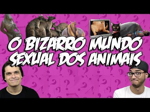 O BIZARRO MUNDO SEXUAL DOS ANIMAIS +16