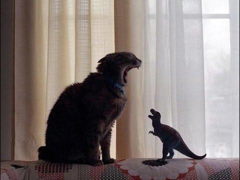 Gato vs Dinossauro(Cat Attack) – Vine || Sem Noçao Ltda