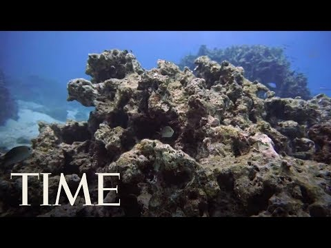 Hawaii Is Set To Become The First State To Ban Sunscreens Harmful To Coral Reefs | TIME Mp3