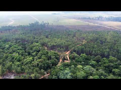 Palm Oil Plantation flyover