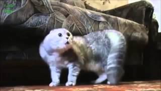 веселуха, Говорящие коты. Забавные кошки. Funny cat compilation