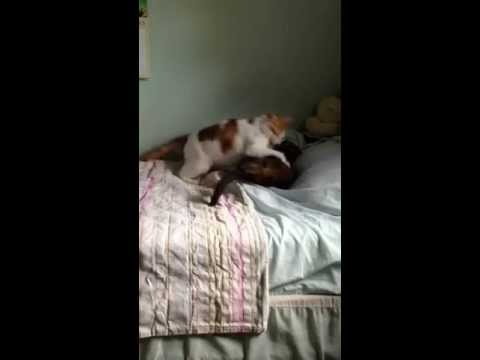 Air horn blown on fighting cats