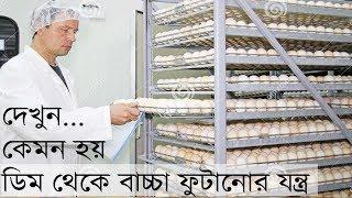 দেখুন ৫০০ ডিম থেকে বাচ্চা ফুটানোর যন্ত্র। ডেলিভারি টু রাজবাড়ী। 500 Egg Incubator