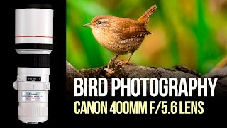 bird photography with the canon 400mm f 5 6 lens