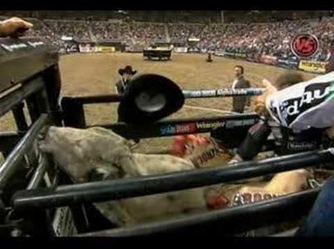 KNOCKED OUT: PBR veteran Ross Coleman gets knocked unconscious in the chute