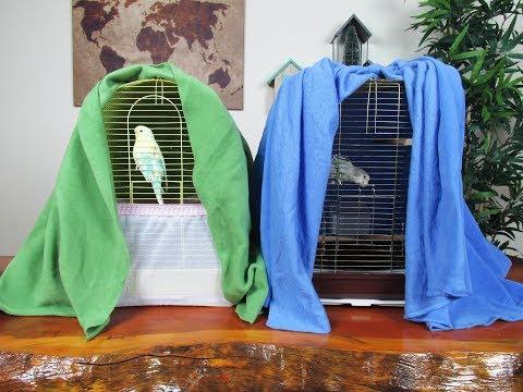 Kış Aylarında Kuş Bakımı | Muhabbet Kuşu | Papağan