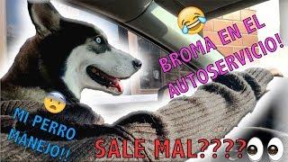 BROMA en AUTO-SERVICIO con mi PERRO!! (Zelda)