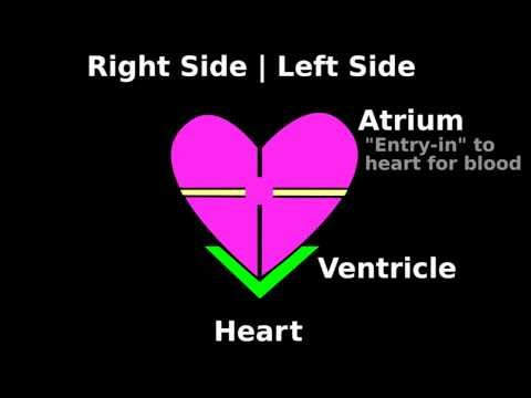 Easy Cardiac Auscultation   Intro S3 S4 S1 S2: Heart Sounds Tutorial (2/7)