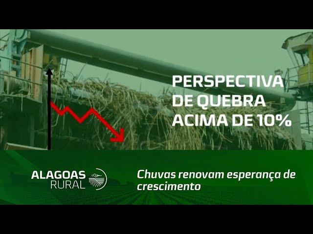 Chuvas renovam esperança de crescimento da safra de cana-de-açúcar, em Alagoas