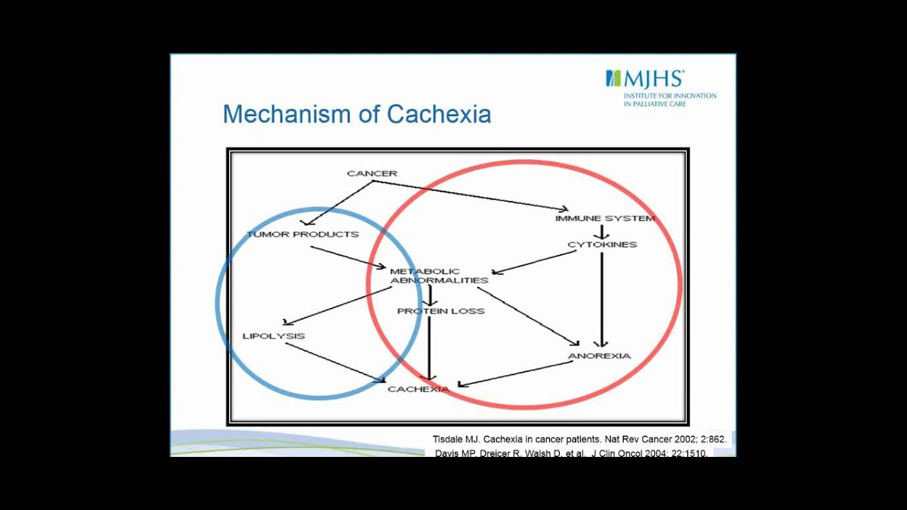 cachexia anorexia in cancer patients
