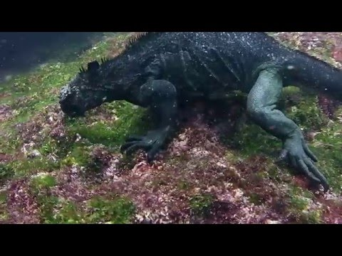 Scuba Diving In Galapagos Islands with Hammerheads