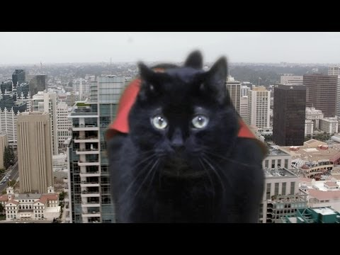 N2 the Talking Cat S3 Ep9 - Super Hero Cat Saves Kona Part 1