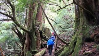霧の屋久島 音楽:姫神/風のこころ Yakushima Island music : Himekami ...