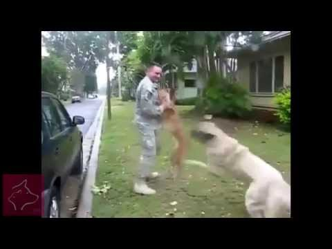 Loving Dogs and Owners Emotionally Reunited - Mans best friend