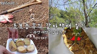 ep1, [감자] 땅갈기에서 새싹까지