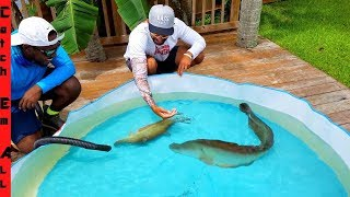 GIANT Knife-FISH Only POOL POND!