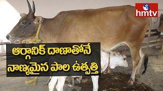 ఆర్గానిక్ దాణాతోనే నాణ్యమైన పాల ఉత్పత్తి | Organic Feed For Cattle | hmtv Mp3