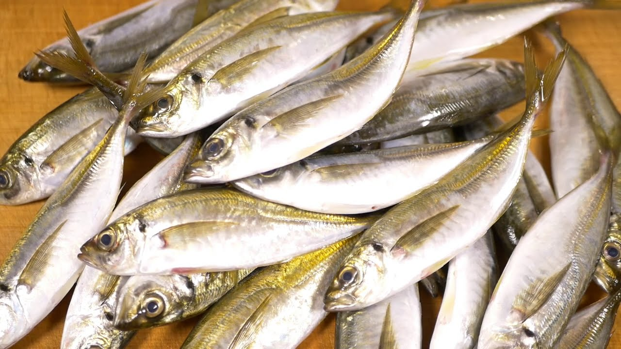 小アジのさばき方~アジのたたきと寿司の作り方~How to fillet a Japanese horse-mackerel and make sushi.