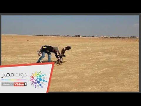 اليوم العالمى للصقارة.. الهواة يحتفلون بصحراء الإسكندرية  - 21:53-2018 / 11 / 17
