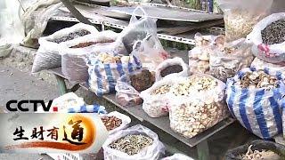 《生财有道》 20191209 生态中国乡村行 吉林抚松:生态山水美 挣钱宝贝多| CCTV财经