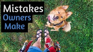 5 COMMON Mistakes New RESCUE DOG OWNERS Make