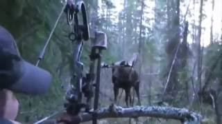 Rangers berburu rusa pemburu menemb...
