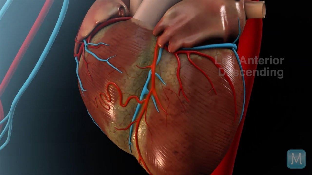 Heart Anatomy Coronary Arteries Match Health Youtube