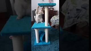Cosmic Pets Solar Flare Cat Tree