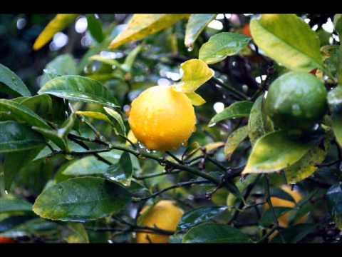 lucianda williams-fruits of my labor+lyrics.