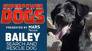 Search and Rescue Dog: Bailey | Superpower Dogs