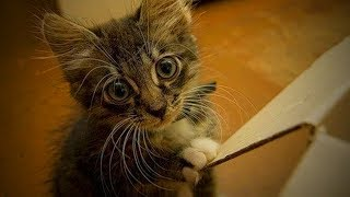 Cute Funny Kittens 😜🐱 Funny Cats (Part 2) [Funny Pets]