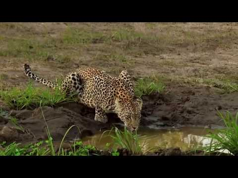 Животные заповедников Африки занесённые в красную книгу Львы Слоны Леопарды Носороги Буйволы