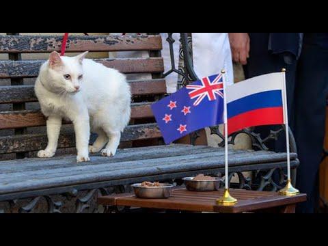 El gato Aquiles será el oráculo del Mundial Rusia 2018