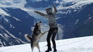 Freedom The Blind Siberian Husky