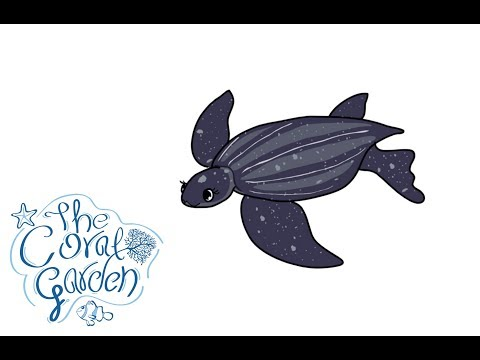 The Story of Lily the Sea Turtle