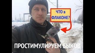 """Неожиданный """"СТИМУЛЯТОР РОСТА"""" для БЫКОВ"""