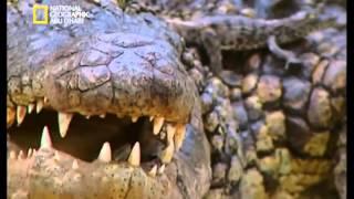 أنا وحش   التمساح   ناشيونال جيوغرافيك أبو ظبي