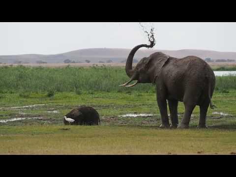 PC298988   Olifanten Amboseli NP