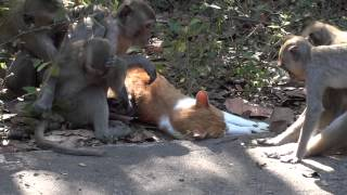 Cat and her monkey friends